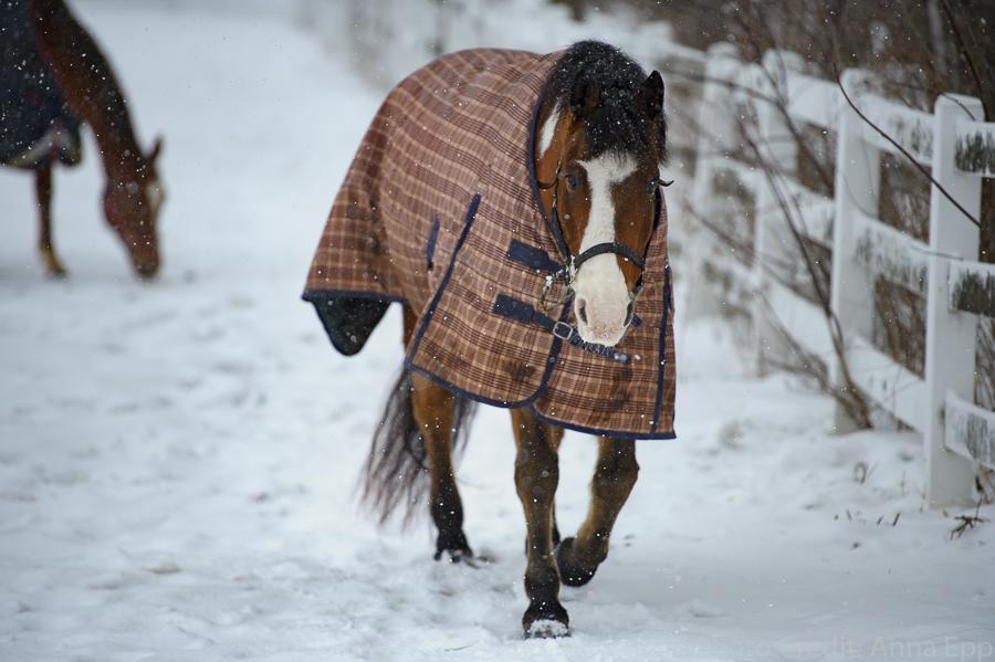Anna_Epp_Equestrian-21