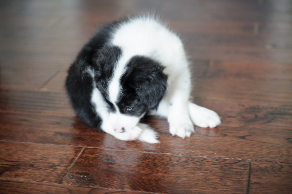 annaepp_puppy-2