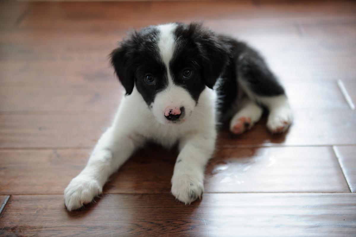 annaepp_puppy-3